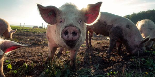 Better Animal Welfare Practices