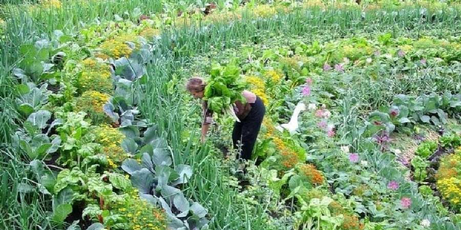 Urban Farming at Regenerative Food and Farming
