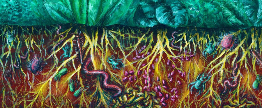 regenerative soils